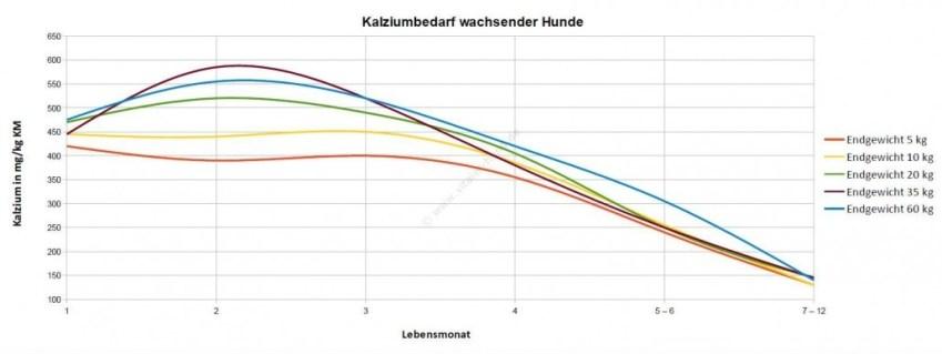 Diagramm-Kalzium-wachsende-Hunde