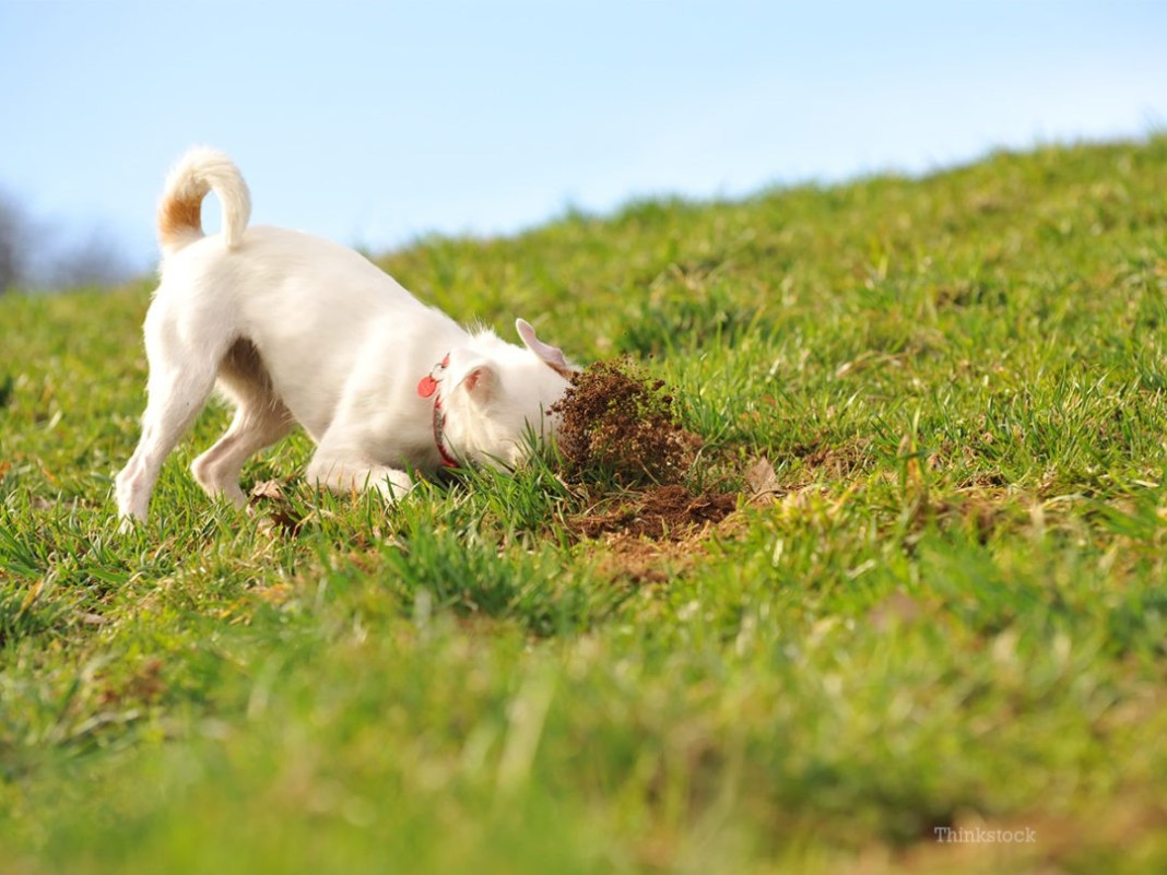why-do-dogs-eat-dirt-and-other-gross-things-fb-147316438