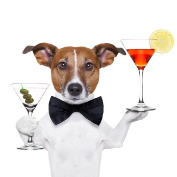dog holding cocktails and a black tie