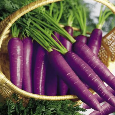 carota-viola