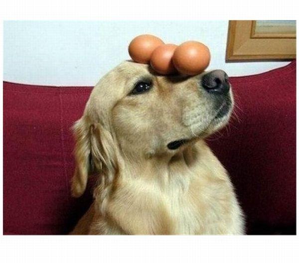 dog-egg-balancing03