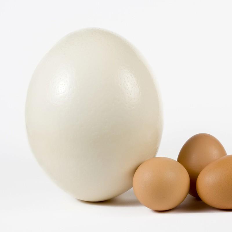 uovo-di-struzzo