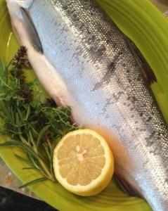 Steelhead salmon