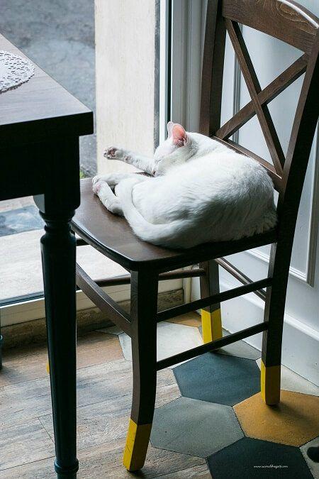 gatto al romeow cat bistrot