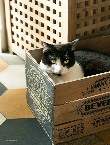 romeow cat bistrot roma