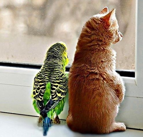 Unlikely pairs: bird and cat