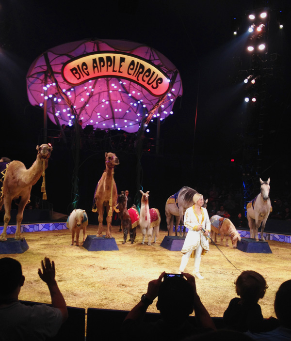 Big Apple Circus: farm animals