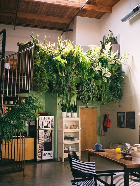 hanging plants via Apartment Therapy