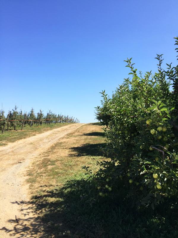 Hudson Valley love | Fishkill Farms