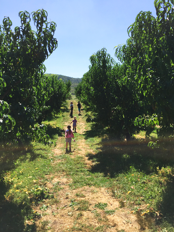 apple picking in the Hudson Valley   Fishkill Farms