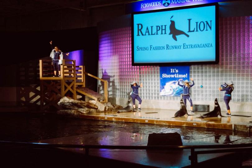 Mystic Aquarium sea lion show