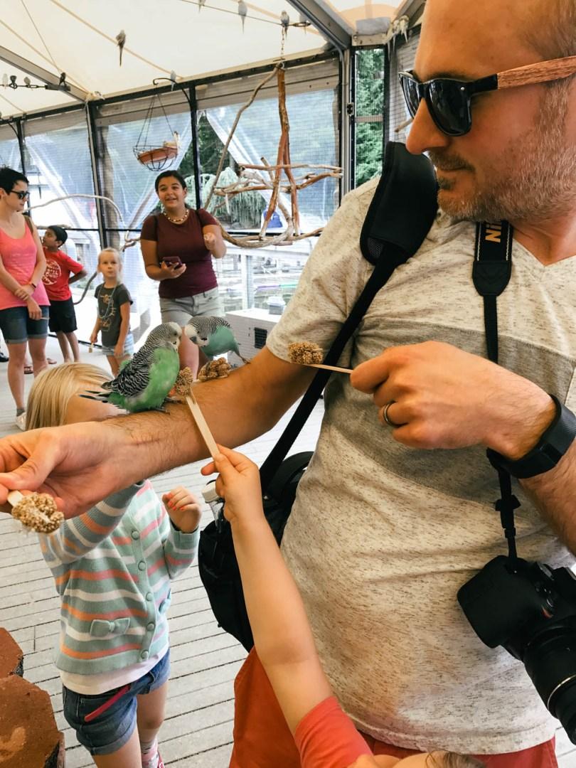 birds at Mystic Aquarium's Birds of the Outback exhibit