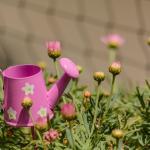 Jakie rośliny warto mieć w ogrodzie?