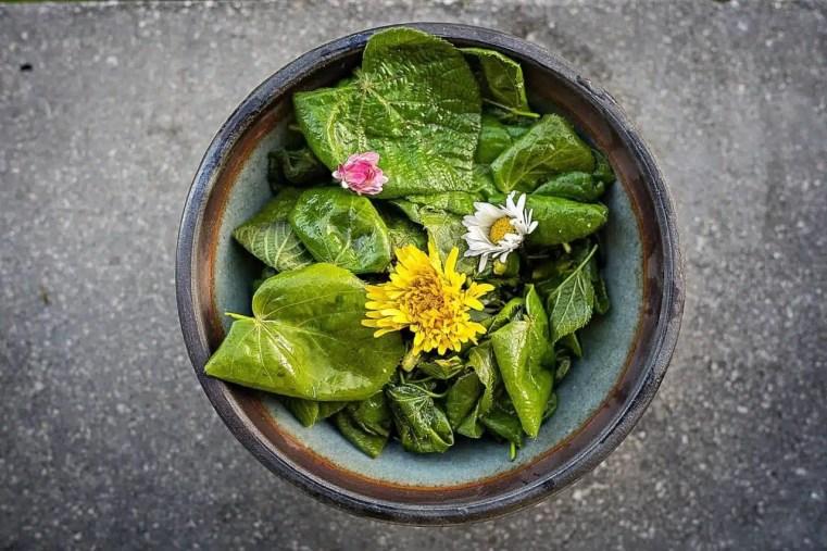 La meilleure salade de printemps. Cueilleurs Sauvages