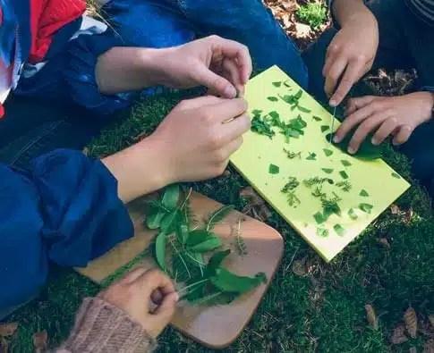 Préparation de la soupe au plantes du sorcier!