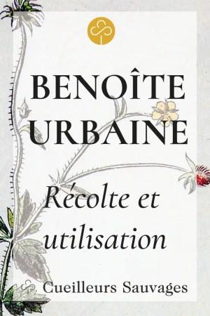 La benoîte urbaine, Geum urbanum, est une plante forestière comestible dont les racines dégagent une odeur de girofle qui aromatise boisons et petits plats. Cueilleurs Sauvages.