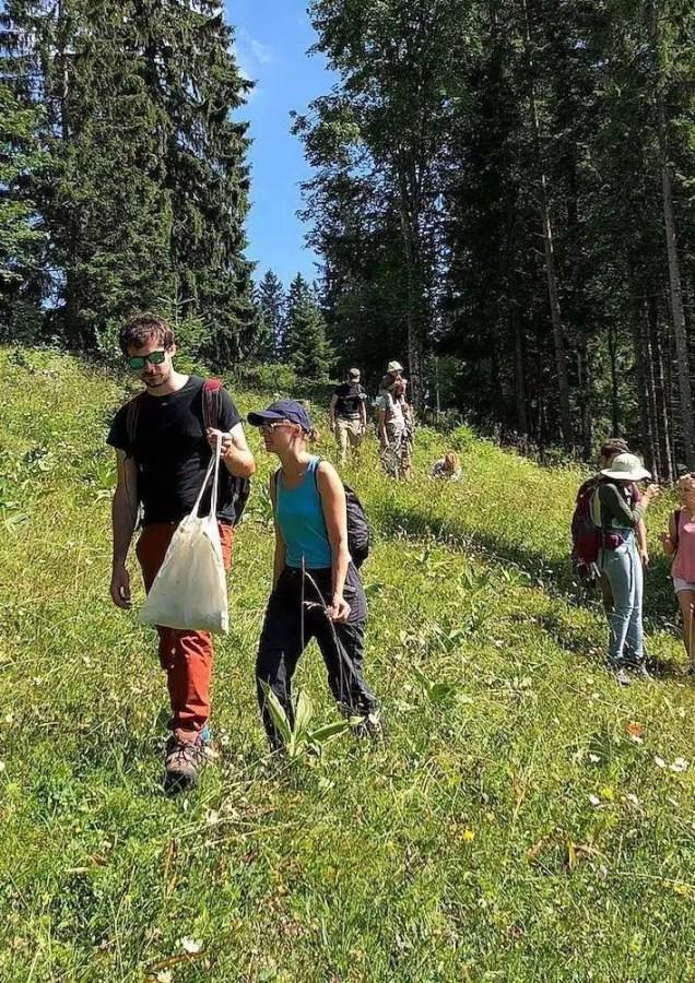 Cours sur les plantes sauvages comestibles et médicinales