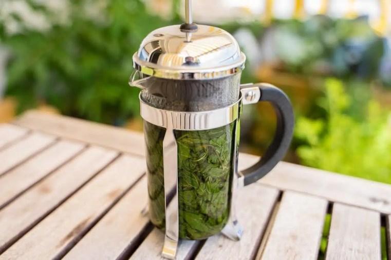 Une presse à café pour infuser les plantes sauvages. Cueilleurs Sauvages.