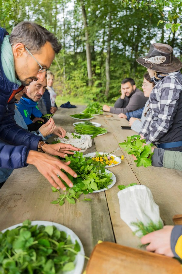 Cuisine des plantes sauvages comestibles