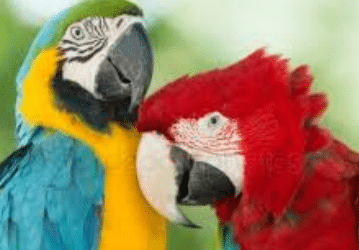 The parrots take charge in the land of tribes