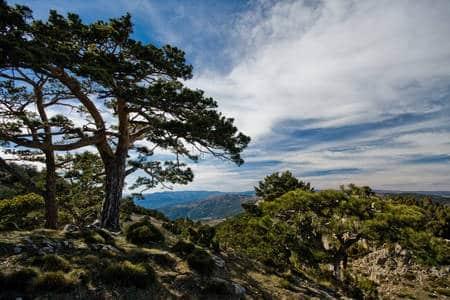Subida a la cumbre del Peñagolosa (1.813 m.) 17