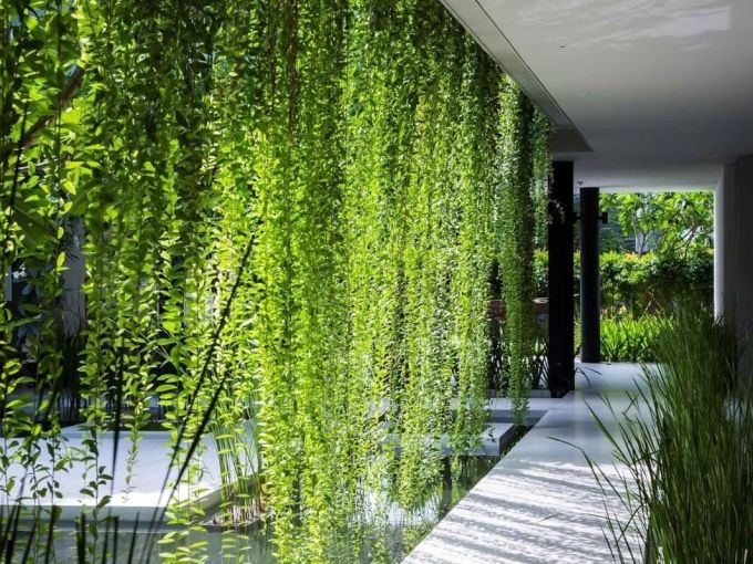 Outdoor Privacy Screen from Vines