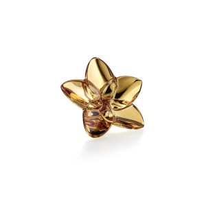 The Bloom Oro