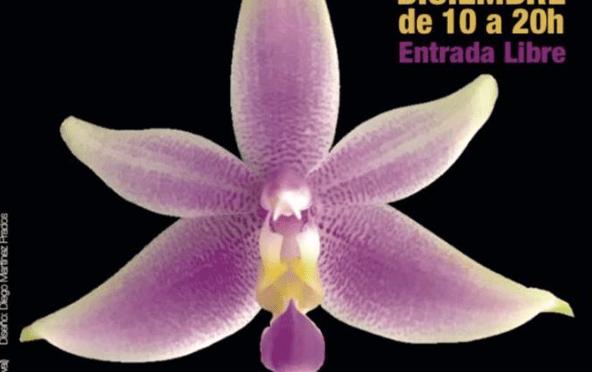 ExpOrquídea 2017