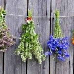 9 hierbas aromáticas y sus remedios naturales