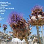 Propiedades depurativas de la alcachofa