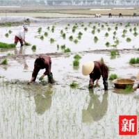 Le vocabulaire chinois du riz(6) — Sinoiseries