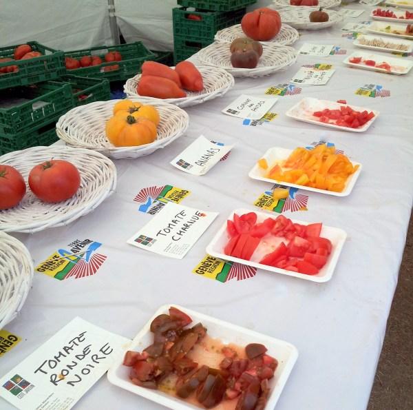 tomato sampling