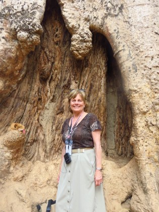 Siem Riep, Cambodia-Ta Prom–huge tree roots