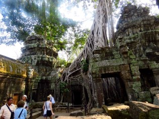 Siem Riep, Cambodia-Ta Prom-temple in the trees