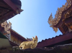 Myanmar–Nga Phe Chaung Monastery–Cat on Roof