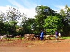 Tanzania–Masai Herders
