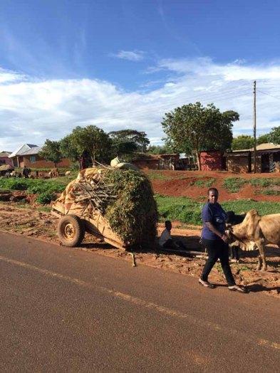 Tanzania–Ox Cart