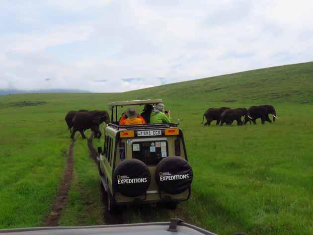 Tanzania Ngorongoro Crater Elephant Crossing