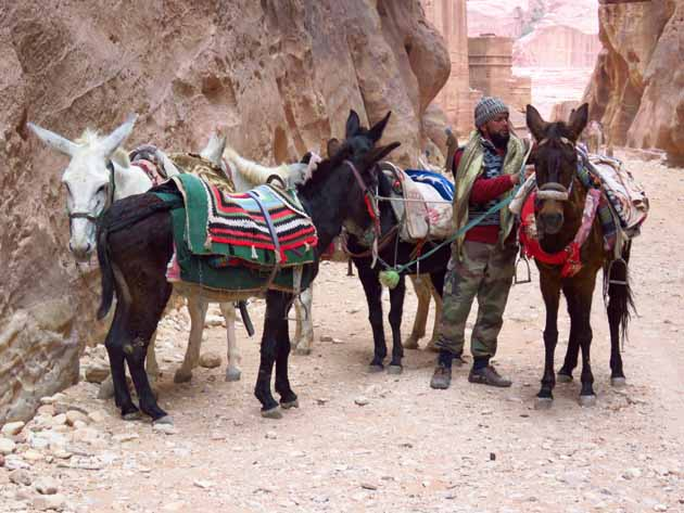 Petra–Our Donkeys