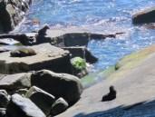 Kangaroo Island–Fur Seals