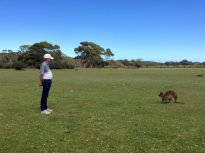 Kangaroo Island staring contest at