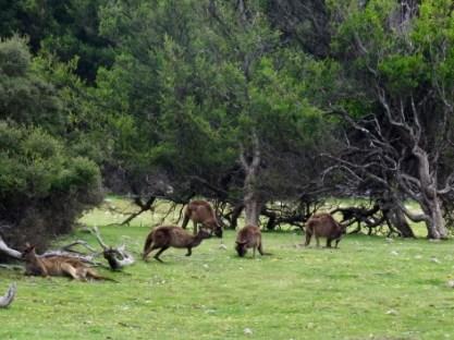 """Kangaroo Island """"residents"""""""