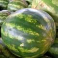 viclic-ceasa-frutas-1293865-h