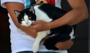 Kucing menjadi Calon Walikota Jalapa di Mexico