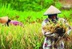 Diversifikasi Pangan Berbasis Kearifan Lokal Sebagai Upaya Mewujudkan Ketahanan Pangan Di Provinsi Papua