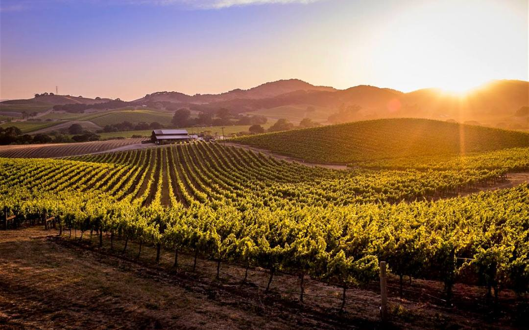 Perfect Pairings: Napa/Sonoma
