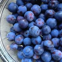 silky wild plum jam