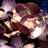 purple varnish clams, part deux