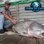 130 lbs world record blue catfish