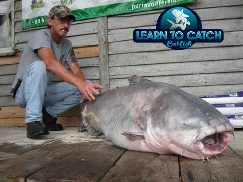 130 lbs world record blue catfish